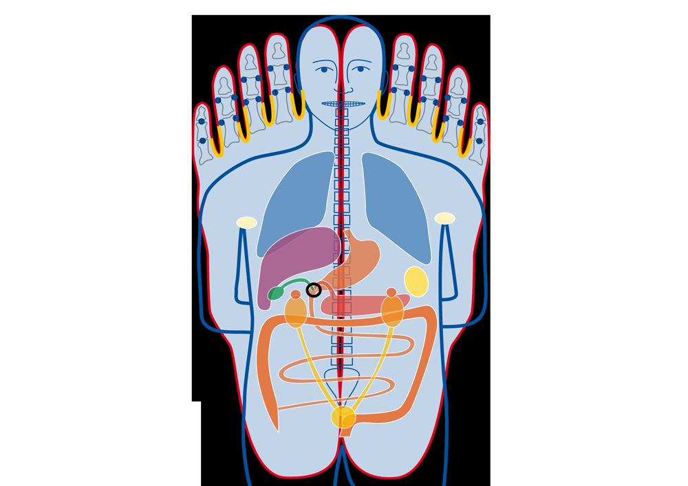 Christa Knauf - Fußreflexpunktbehandlung - Indikationen - Fußreflexzonenbehandlung